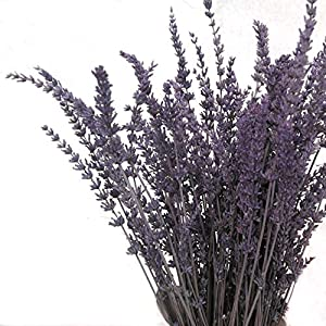 Gracebuy 2 Bundles Pack Dried Long-Lasting Preserved Lavender Bundles for Decorative Flowers Bouquet 22