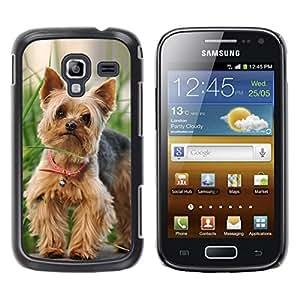 Be Good Phone Accessory // Dura Cáscara cubierta Protectora Caso Carcasa Funda de Protección para Samsung Galaxy Ace 2 I8160 Ace II X S7560M // Cute Happy Yorkie Terrier