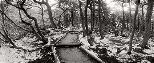 (View of a Trail Through The Trees of Tierra del Fuego National Park, Patagonia, Argentina by Panoramic Images Laminated Art Print, 44 x 18 inches )