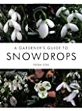 A Gardener's Guide to Snowdrops