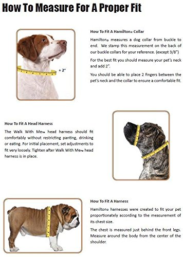 Pictures of Hamilton Double Thick Nylon Deluxe Dog Collar DD 22BY 3