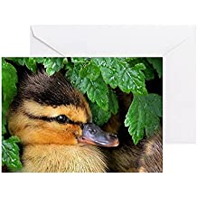 CafePress - Mallard Duckling Greeting Cards - Greeting Card, Note Card, Birthday Card, Blank Inside Glossy