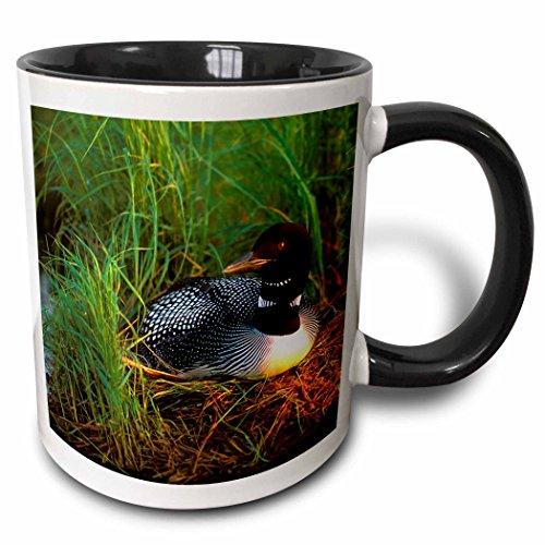 3dRose 91399_4 Minnesota, Common Loon Bird, Leech Lake-Us24 Pha0015-Peter Hawkins Two Tone Black Mug, 11 oz, White
