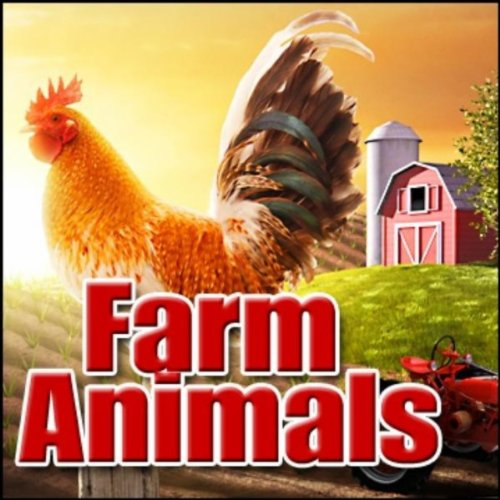 Barn, Animals - Indoor Barn Ambience: Pigs, Sheep, Chickens, Dog, Rooster Farm, Rural & Countryside Ambiences