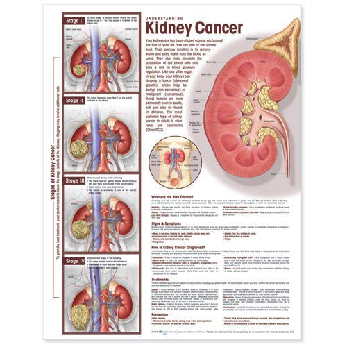 Understanding Kidney Cancer Anatomical -