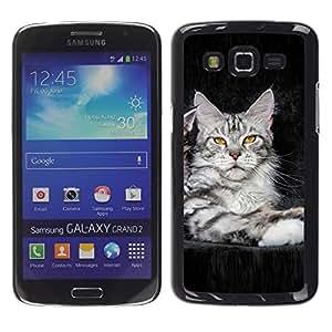 Caucho caso de Shell duro de la cubierta de accesorios de protección BY RAYDREAMMM - Samsung Galaxy Grand 2 SM-G7102 SM-G7105 - koshka kotenok fon