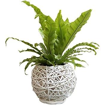 Eco-Friendly Artistic Wicker Woven Tabletop Flower Pot Bascket Ivory
