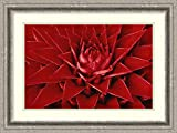 Framed Art Print 'Pingwing Bromeliad enormous flower belonging to the pineapple family, Barro Colorado Island, Panama' by Christian Ziegler