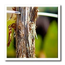 ht_50493_2 Jos Fauxtographee Realistic - A Wooden Post for a Fence Done with a Large Aperture Close up with Blurred Green Backdrop - Iron on Heat Transfers - 6x6 Iron on Heat Transfer for White Material