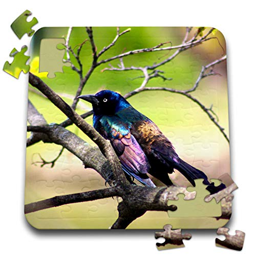 3dRose Stamp City - Birds - Photograph of a Colorful Common Grackle Sitting Among The Branches. - 10x10 Inch Puzzle (pzl_291284_2)