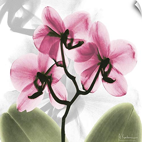 "CANVAS ON DEMAND Pink Orchid x-ray Photography Wall Peel Art Print, 16""x16"""