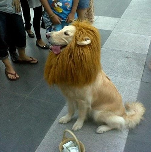 Looching The Most Popular Light Brown Lion Mane Dog Costume Wig Pet Festival Halloween Party Fancy Hair with Ears Clothes Dress Suppliers Fits Neck Girth from 35-80cm(23.62