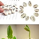 Wintefei 20Pcs White Magic Bean Seeds Gift Plant Growing Message Painting Word