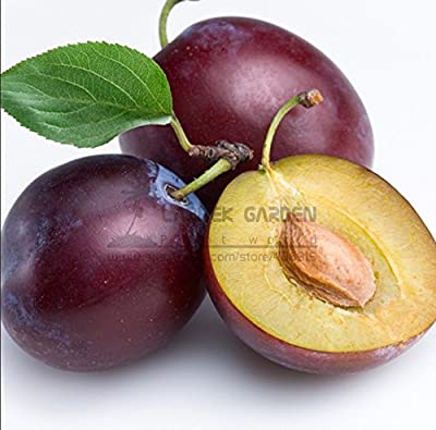 New Delicious Round Plums Fruit Tree 10+ Seeds/Pack