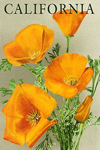 California - Poppies (12x18 Art Print, Wall Decor Travel Poster)
