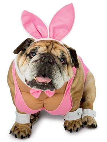 Rasta Imposta Hunny Bunny Dog Costume, Large -