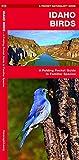 Idaho Birds: A Folding Pocket Guide to Familiar Species (Pocket Naturalist Guides)