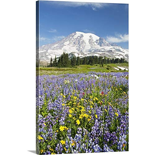 GREATBIGCANVAS Gallery-Wrapped Canvas Entitled Wildflowers in Paradise Park, Mount Rainier National Park, Washington by Craig Tuttle 12