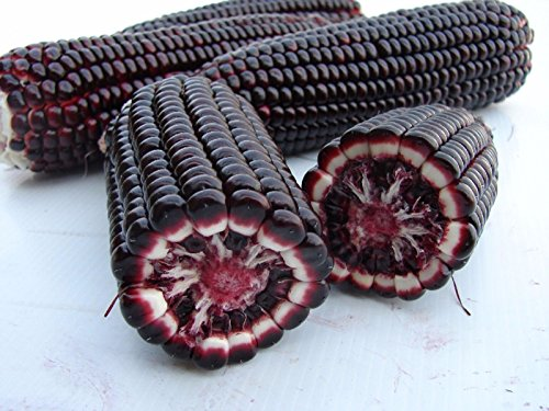 purple corn seeds, purple corn, 50 seeds Free Shipping (Organic Blue Corn Seeds compare prices)