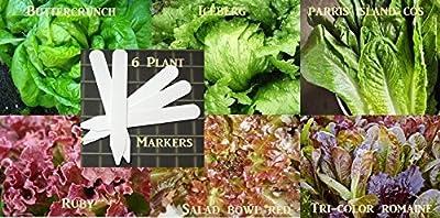 Bulk 6 Lettuce Seeds Survival Seeds 900 Seeds Upc 646263360460 + 6 Plant Markers