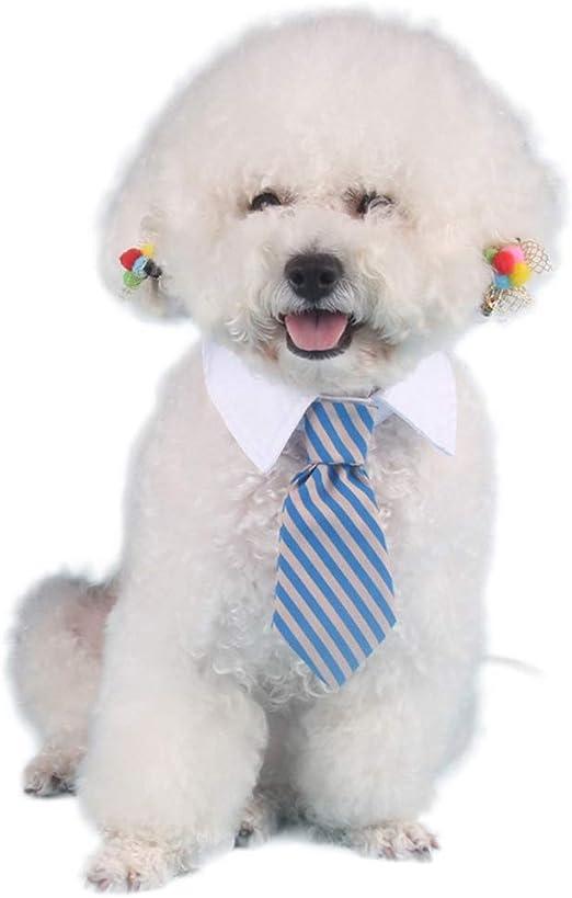 Border Terrier Gemelos y clip de corbata Barra Conjunto de regalo de perro de caza de diapositivas de hombre 037