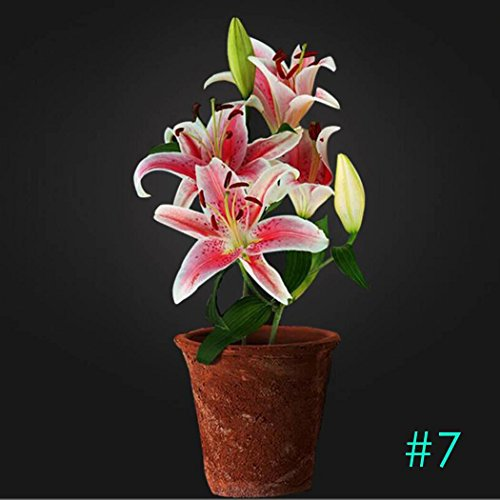 Potted Peace Lily (Home Garden Balcony Perfume Lily with Buds Green Plants Potted Flower Seeds-50 PCS/Pack)