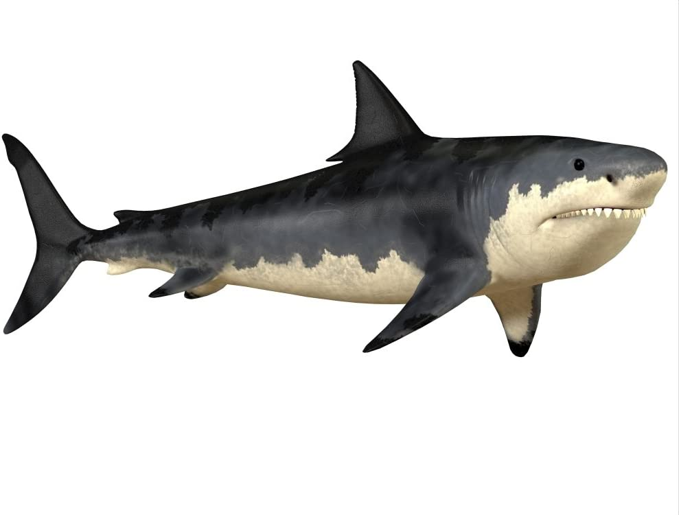 Posterazzi The Megalodon shark was an enormous predator in the Cenozoic Era of prehistoric Earth Poster Print (32 x 24)