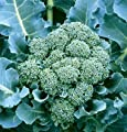 David's Garden Seeds Broccoli De Cicco D148 (Green) 100 Organic Heirloom Seeds