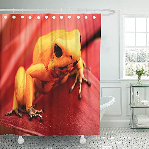 Emvency Shower Curtain Waterproof Poison Dart Frog Phyllobates Terribilis Deadly Animal From the Tropical Amazon Polyester Fabric 72 x 78 Inches Set With Hooks