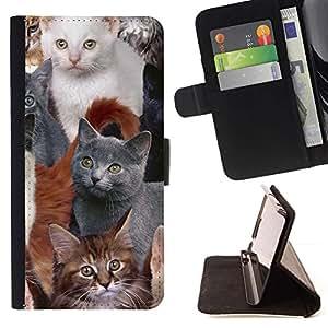 Momo Phone Case / Flip Funda de Cuero Case Cover - Americanos Gatitos British Shorthair gris; - Sony Xperia M5