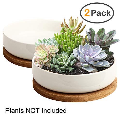 ZOUTOG Succulent Pots 6