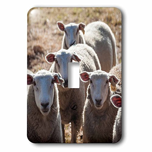 Valley Sheep - 3