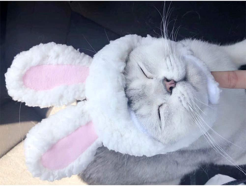 Pet Costume Rabbit Wig for Cat Small Medium Dog Halloween Dress up with Stand Ears XS//S//M//L