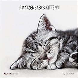 Katzenbabys 2020 Broschürenkalender