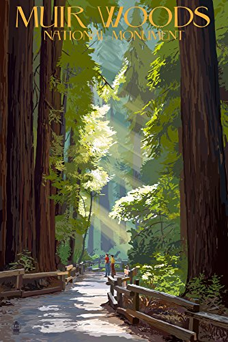 Muir Woods National Monument, California - Pathway (9x12 Art Print, Wall Decor Travel Poster) from Lantern Press