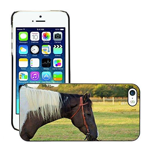 Bild Hart Handy Schwarz Schutz Case Cover Schale Etui // M00133271 Pferde Texas Reittier // Apple iPhone 5 5S 5G