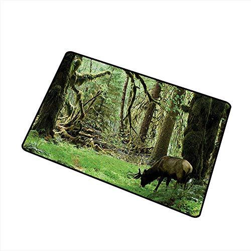 Diycon Non-Slip Door mat Rainforest Roosevelt Elk in Rainforest Wildlife National Park Washington Antlers Theme W16 xL20 Mildew Proof