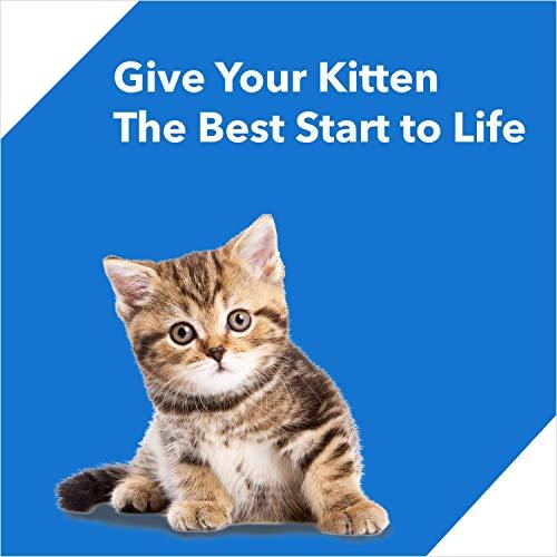 Drools Kitten (1-12 Months) Dry Cat Food, Ocean Fish, 3kg + 1.2kg Free