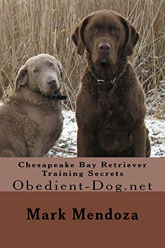 Chesapeake Bay Retriever Training Secrets: Obedient-Dog.net