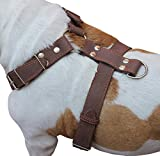 Brown Genuine Leather Dog Harness, Large to Xlarge. 33''-37'' Chest, 1.5'' Wide Straps, Amstaff.