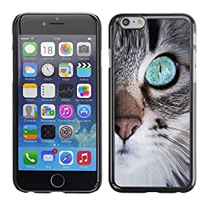 Paccase / SLIM PC / Aliminium Casa Carcasa Funda Case Cover para - Cute Kitten Eye Nose Whiskers Furry - Apple Iphone 6
