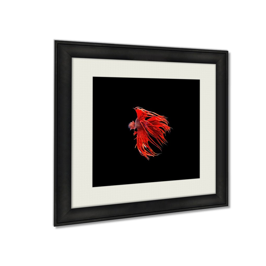 Ashley Framed Prints Red Siamese Fighting Fish Betta Splendens Isolated On Black, Wall Art Home Decor, Color, 34x34 (frame size), AG5232397 by Ashley Framed Prints