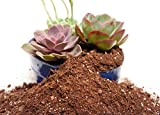 Organic Succulent & Catcus Soil Mix by Perfect Plants — 4 Quarts for All Succulent and Cactus Types — Mixed for Drainage and Aeration