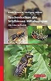 Taschenlexikon der Wildbienen Mitteleuropas: Alle Arten im Porträt