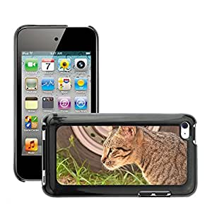 Hot Style Cell Phone PC Hard Case Cover // M00112067 A Cat Staring Cat A Cat Besides A Car // Apple ipod Touch 4 4G 4th