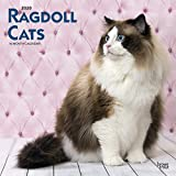 Ragdoll Cats 2020 12 x 12 Inch Monthly Square Wall Calendar, Animals Cats