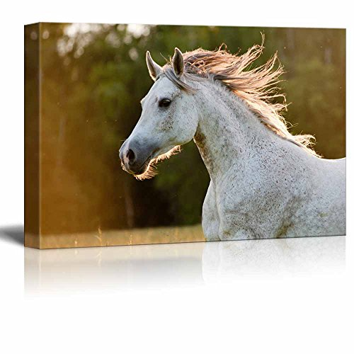 Canvas Prints Wall Art - Running White Arabian Horse | Modern Wall Decor/Home Decor Stretched Gallery Wraps Giclee Print & Wood Framed. Ready to Hang - 24'' x 36'' by wall26