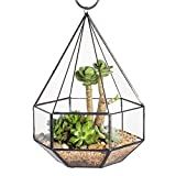 Hanging Six-surface Diamond Glass Geometric Terrarium Flower Pot Planter Hanging Plant Succulent with 3 Opening 6.3×6.3×9.8 inches