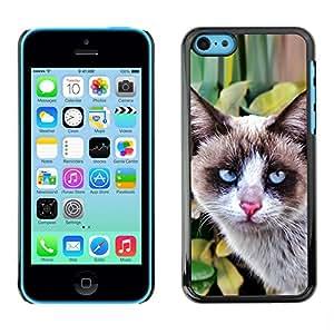 Vortex Accessory Carcasa Protectora Para APPLE iPHONE 5C - Thai Snowshoe Breed Cat House Clever -