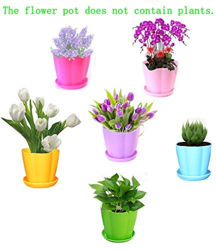 50 gallon planter pots - 5